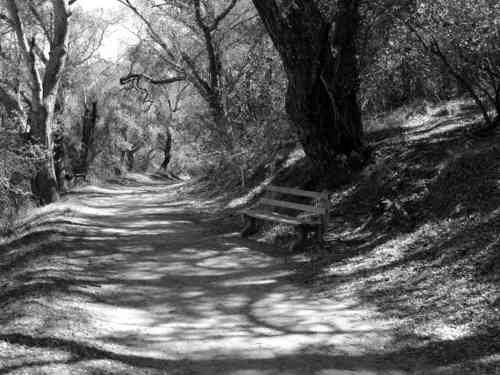 Black and white photo signed 8x10 secluded pathway